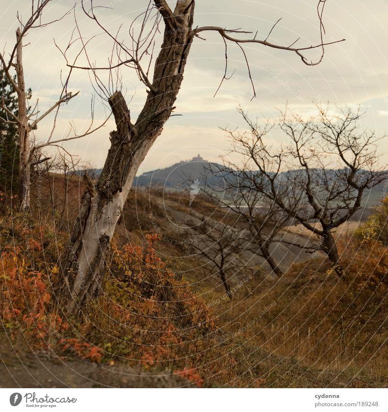 Vergänglichkeit Natur Baum ruhig Ferne Leben Tod Herbst Freiheit Berge u. Gebirge Landschaft Umwelt Gras träumen Feld Zeit Ausflug