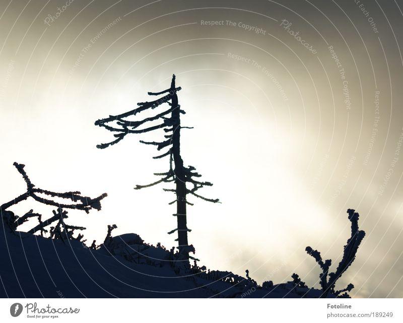Düster Natur Himmel Baum Pflanze Winter schwarz Wolken dunkel kalt Schnee Berge u. Gebirge Landschaft Luft Eis Wetter Umwelt