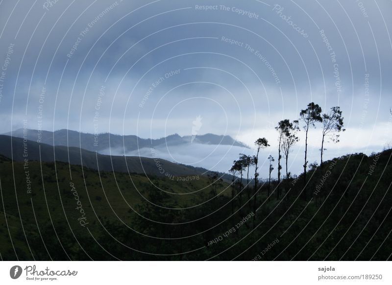verhangener morgen Umwelt Natur Landschaft Pflanze Himmel Wolken schlechtes Wetter Baum bromo Indonesien Java Asien Südostasien dunkel trist blau grau