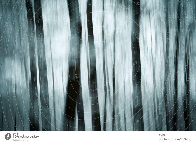 Alptraum Natur Pflanze Baum Einsamkeit Winter Landschaft Wald Umwelt dunkel kalt Schnee Gefühle träumen außergewöhnlich Angst geheimnisvoll