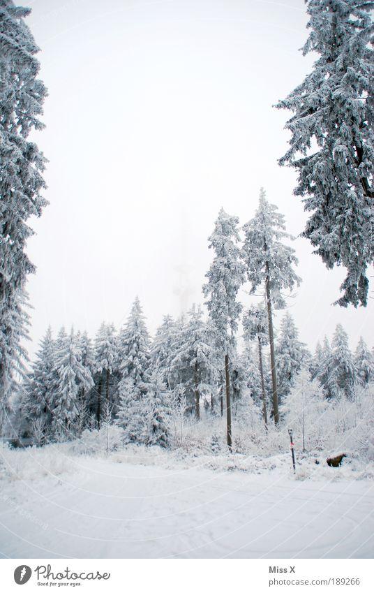 Waldstein Natur weiß Baum Winter Ferien & Urlaub & Reisen Wolken Schnee Berge u. Gebirge Eis Nebel Wetter Umwelt Ausflug Frost