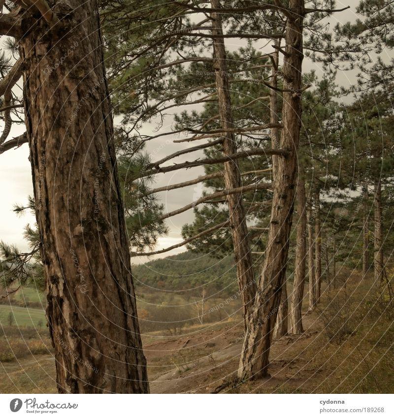 Waldrand Natur Baum ruhig Einsamkeit Ferne Leben Erholung Berge u. Gebirge Bewegung Freiheit träumen Landschaft Umwelt Zeit ästhetisch