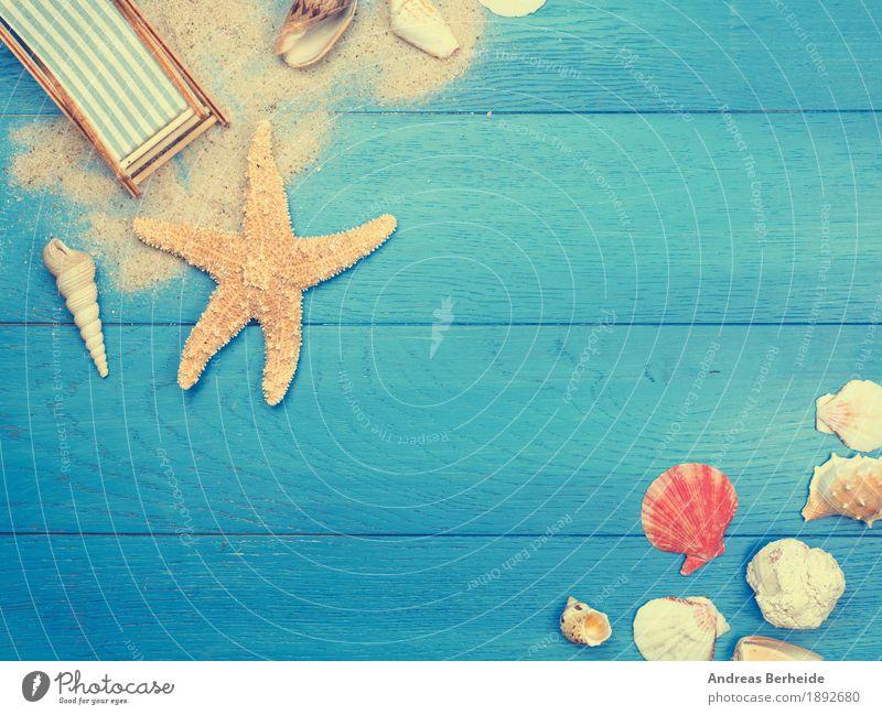 Urlaub Ferien & Urlaub & Reisen Sommerurlaub Strand Meer Sand Erholung Freizeit & Hobby Tourismus Wunsch Deckchair Starfish vacation trip natural Paneele plank