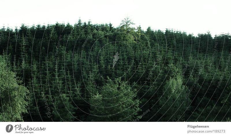 Jetzt ein Glas Waldmeister... Natur alt Ferien & Urlaub & Reisen Baum Pflanze Landschaft Umwelt Wiese Arbeit & Erwerbstätigkeit Wildtier Freizeit & Hobby