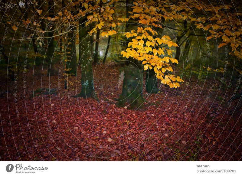 bevor es dunkel wird Wohlgefühl Erholung Natur Herbst Baum Blatt Herbstlaub Herbstfärbung Herbstwald herbstlich Park Wald leuchten gelb rot Einsamkeit