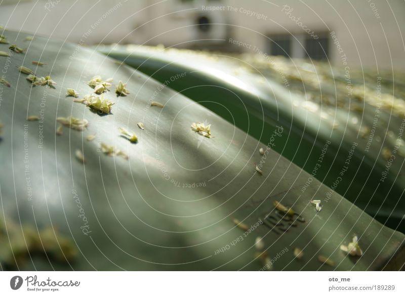 Rubbish 1 Müllbehälter grün Blüte Sonnenlicht Tüte abstrakt konzeptionell Hinterhof Alltagsfotografie