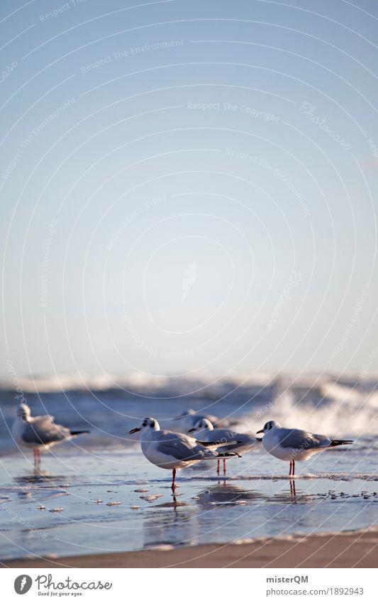 Gaffer I Meer Küste Kunst Vogel ästhetisch Ostsee Möwe Möwenvögel Prerow Uferpromenade Möwendreck Ostseeinsel