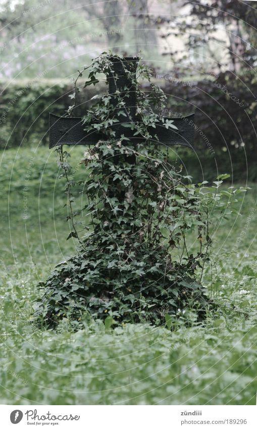 vergessen alt Einsamkeit Leben Tod Traurigkeit Stimmung Metall Trauer Wachstum Zeichen Kreuz Friedhof Ranke Efeu bewachsen