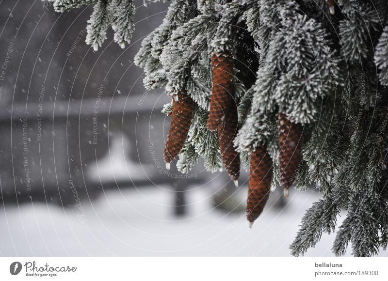 Zapfenstreich Natur Baum Pflanze Winter Wald kalt Schnee Berge u. Gebirge Schneefall Eis Umwelt Frost Klima Tanne Gipfel Schönes Wetter