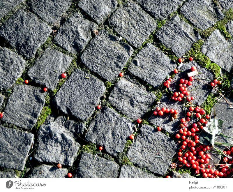 grau-rot Umwelt Winter Schönes Wetter Straße Stein liegen ästhetisch klein natürlich grün bizarr Wege & Pfade Pflastersteine Kopfsteinpflaster Straßenbelag Fuge