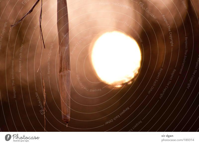 eine unheimliche begegnung Natur weiß Baum Sonne Einsamkeit Winter ruhig Erholung Gras Holz grau Kunst braun rosa Nebel Ausflug
