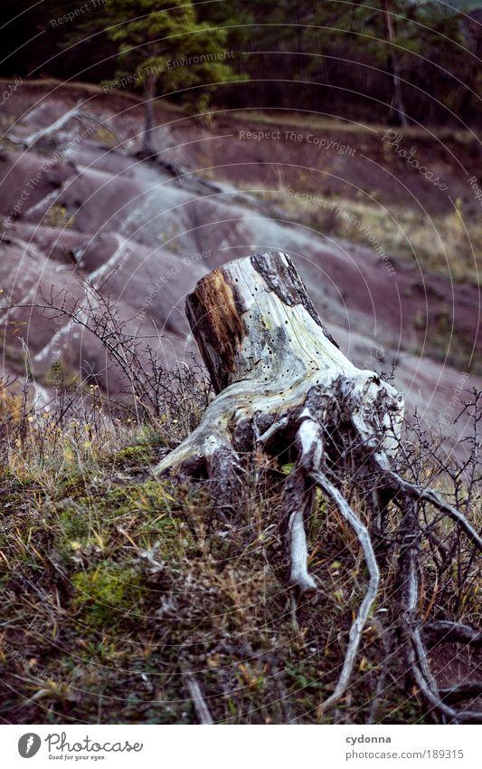 Schon länger her Natur Baum Ferne Umwelt Tod Leben Berge u. Gebirge Traurigkeit Zeit Feld Klima ästhetisch Wandel & Veränderung Vergänglichkeit Hügel Sorge