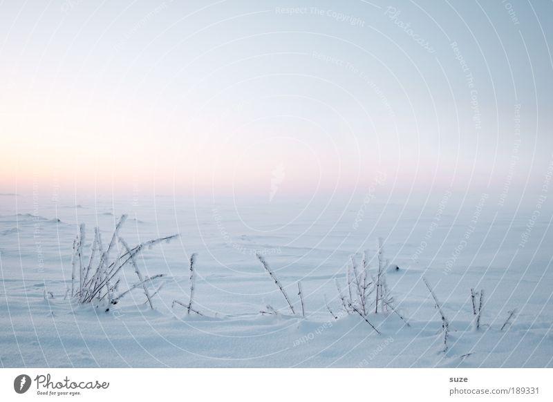 Januar Himmel Natur schön weiß Pflanze Einsamkeit ruhig Winter Landschaft Umwelt kalt Schnee Gras hell Luft Horizont