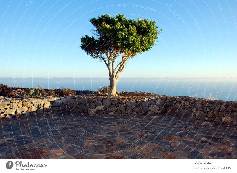 Traumbaum Umwelt Landschaft Luft Himmel Horizont Sommer Schönes Wetter Baum Grünpflanze Insel Gomera Terrasse Sehnsucht Fernweh Einsamkeit Freiheit