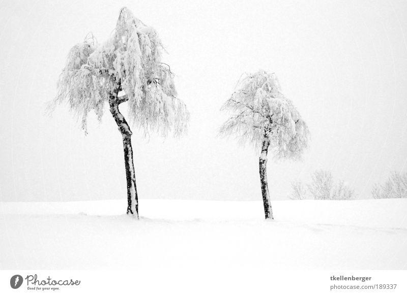 Zweisamkeit Natur Landschaft Wasser Winter Nebel Eis Frost Schnee Pflanze Baum Park frieren kalt Sauberkeit grau schwarz weiß ruhig Baumstamm Wintemärchen