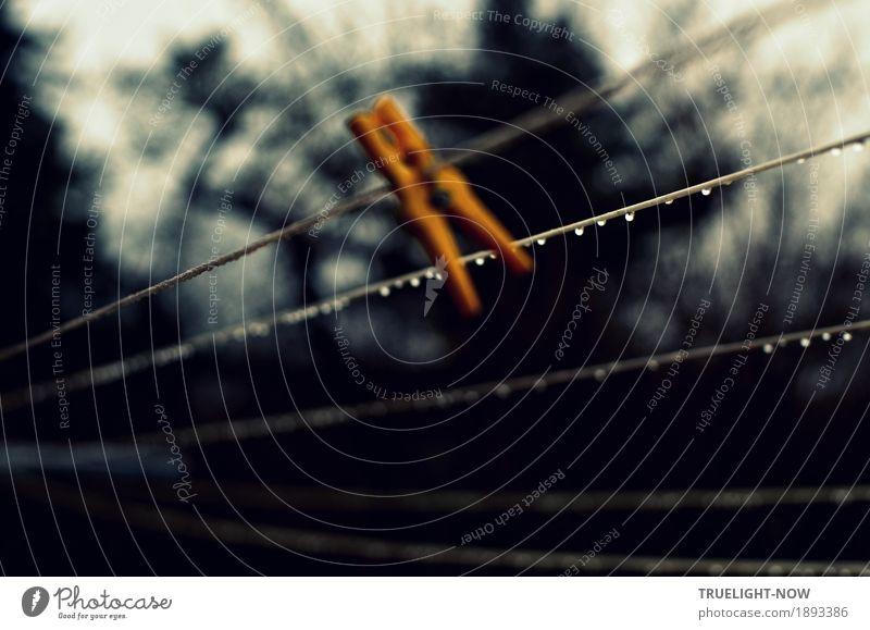 Einfach mal hängen lassen... Häusliches Leben Garten Wäscheleine Wäscheklammer Natur Wassertropfen Herbst Winter Regen Baum Sträucher dunkel kalt nah nass trist
