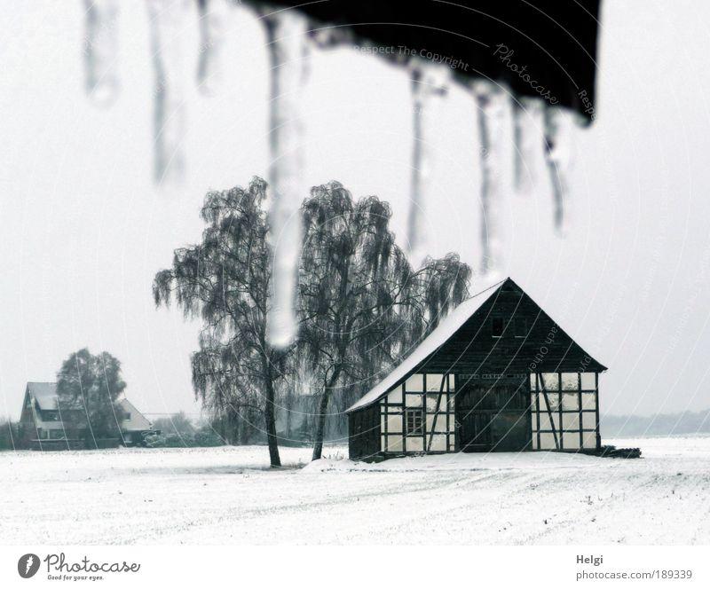 Winter auf dem Land Umwelt Natur Landschaft Pflanze Himmel Wetter Eis Frost Schnee Baum Feld Dorf Haus Bauwerk Gebäude Architektur Fachwerkhaus Bauernhof