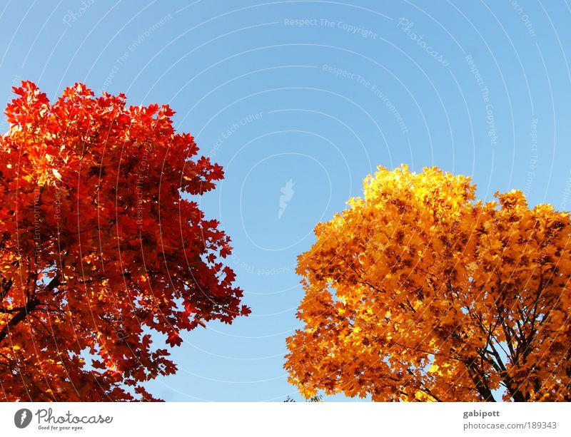 Toner nachgefüllt Umwelt Natur Landschaft Himmel Herbst Schönes Wetter Pflanze Baum Blatt Laubwald Baumstamm Blätterdach Herbstfärbung Erholung blau braun