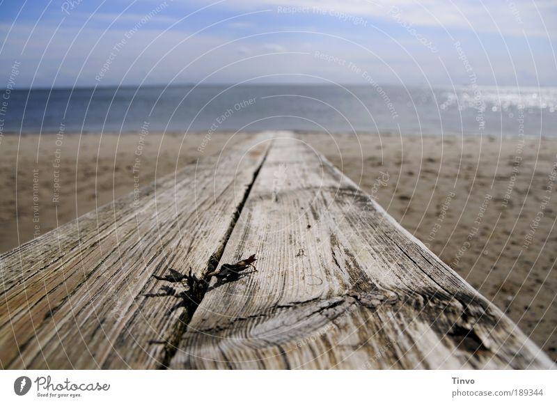 Das alte Brett und das Meer Urelemente Erde Sand Luft Wasser Himmel Klima Klimawandel Schönes Wetter Küste Strand Nordsee See Zufriedenheit einzigartig Erholung