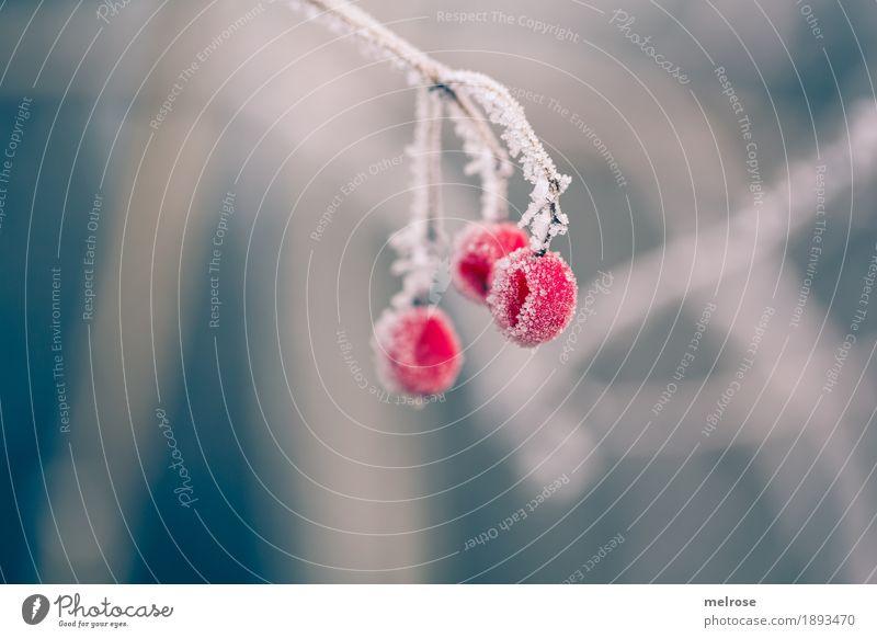 """EISB""""EE""""REN Natur Pflanze Farbe Stadt weiß rot ruhig Winter Umwelt kalt Blüte Traurigkeit Schnee Stimmung Feld Eis"""