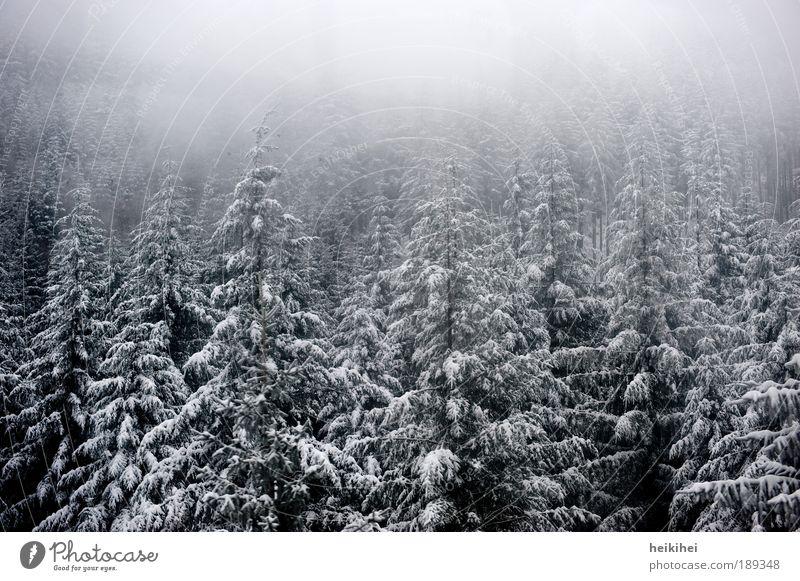 S C H W A R Z wald Natur weiß Baum Pflanze Winter schwarz Wald kalt Schnee Berge u. Gebirge grau Landschaft Eis Nebel Umwelt Erde