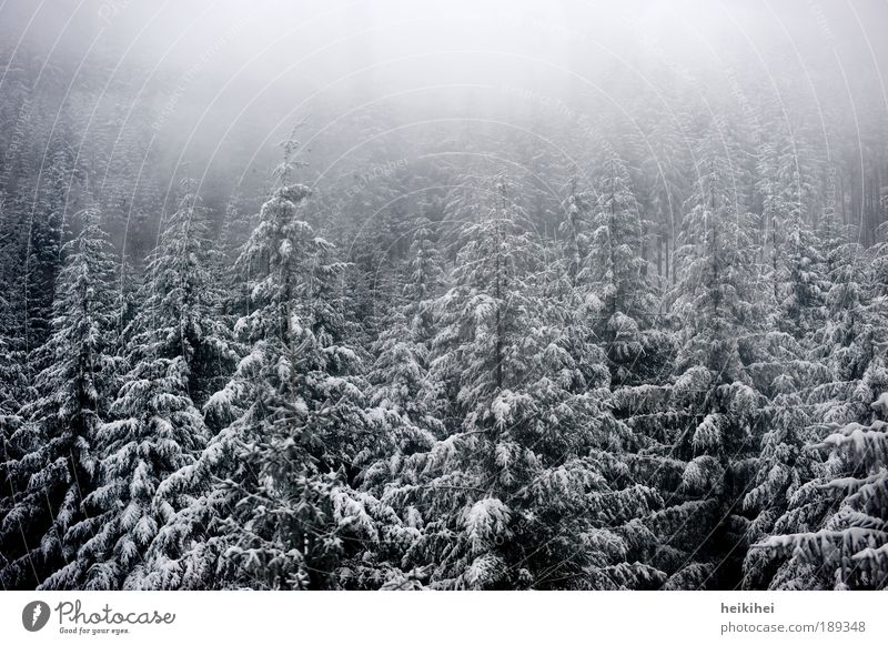S C H W A R Z wald Umwelt Natur Landschaft Pflanze Erde Winter Nebel Eis Frost Schnee Baum Wald Berge u. Gebirge kalt grau schwarz weiß Farbfoto Gedeckte Farben