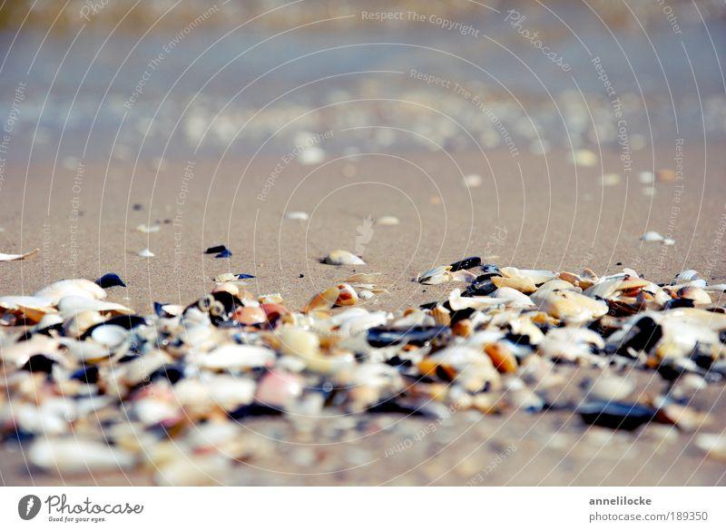Muschelsuche Natur Wasser Sonne Meer Sommer Strand Ferien & Urlaub & Reisen Erholung Sand hell Wellen Küste Umwelt Suche Erde Ausflug