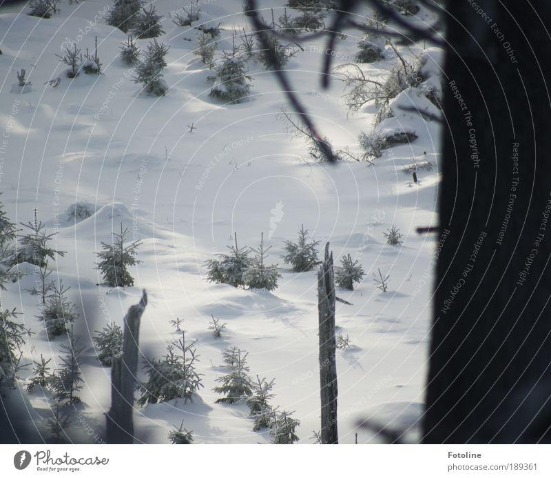 Rotkäppchen und der böse Golf Umwelt Natur Landschaft Pflanze Urelemente Erde Luft Winter Klima Klimawandel Wetter Schönes Wetter Eis Frost Schnee Baum Wald