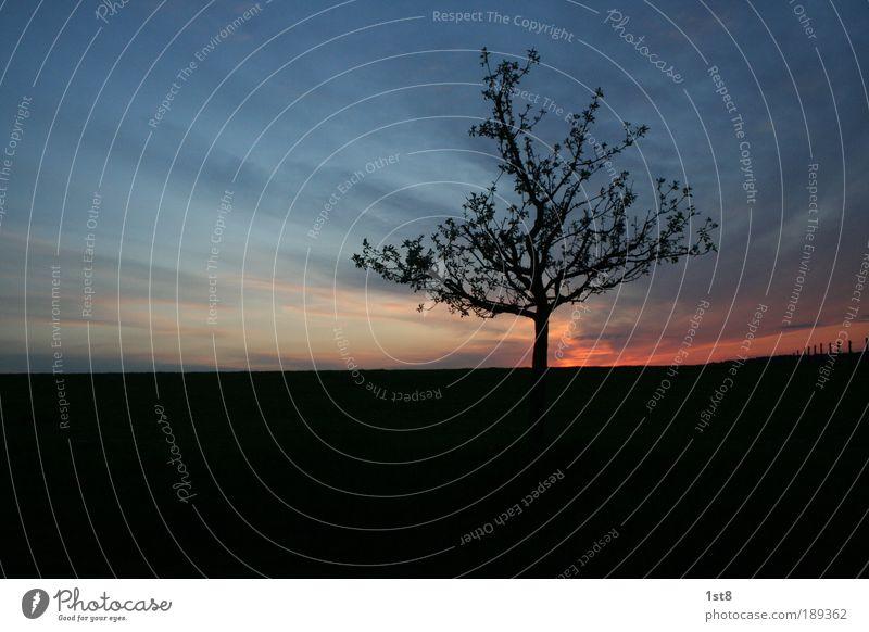 einsam Himmel Natur Pflanze Baum Landschaft Winter Umwelt Herbst Gefühle Horizont Feld Idylle Schönes Wetter Wachsamkeit Abenddämmerung Weide