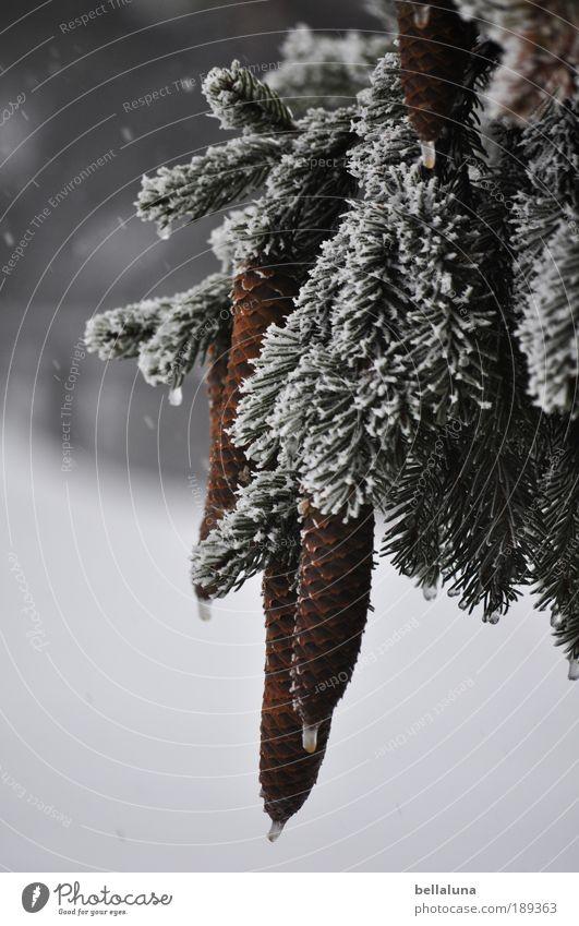 O'zapft is! - Für Johns bayrische Seele! :-)) Natur Baum Pflanze Winter Umwelt kalt Berge u. Gebirge Schnee Schneefall Eis Wetter Klima Wassertropfen Frost Schönes Wetter Gipfel