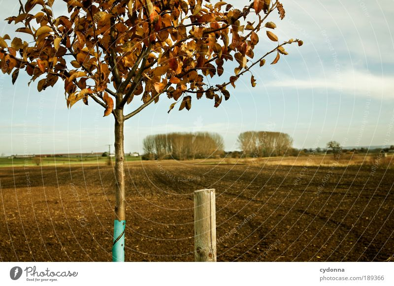 Landliebe Natur Himmel Baum ruhig Blatt Ferne Leben Erholung Herbst träumen Landschaft Zufriedenheit Feld planen Umwelt Zeit
