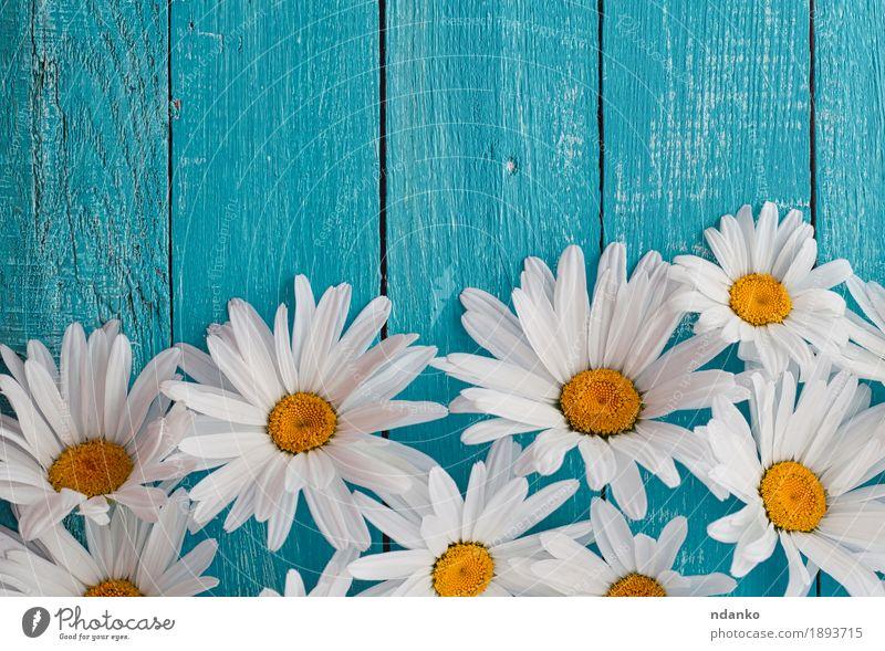 Gänseblümchenkamillenblumen auf hölzernem Hintergrund Natur Pflanze blau Sommer schön weiß Blume gelb Blüte natürlich Holz Garten Feste & Feiern oben hell