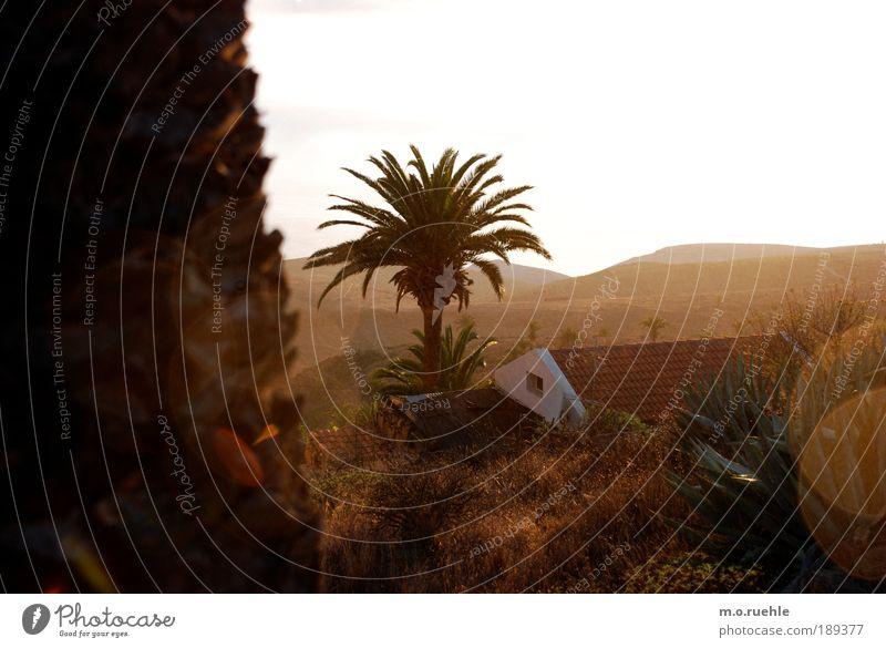 Goldland Haus Traumhaus Natur Landschaft Sommer Baum Gras Kaktus Wildpflanze Palme Palmenwedel Hügel Küste Insel Kanaren La Gomera Dorf Dach ästhetisch Freiheit