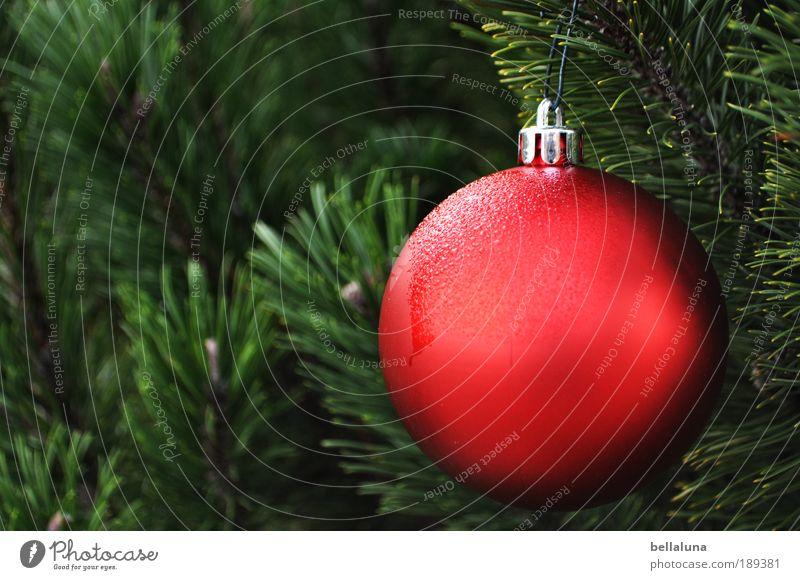 Tau - mal nicht im Gras - Multi Natur Wasser Weihnachten & Advent Baum Pflanze Freude kalt Garten Umwelt Regen Wetter Feste & Feiern Eis elegant Design Klima