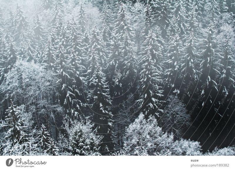Geisterwald ruhig Winter Umwelt Natur Landschaft Pflanze Wetter Nebel Eis Frost Baum Wald authentisch dunkel kalt grau schwarz Trauer Traurigkeit Tanne