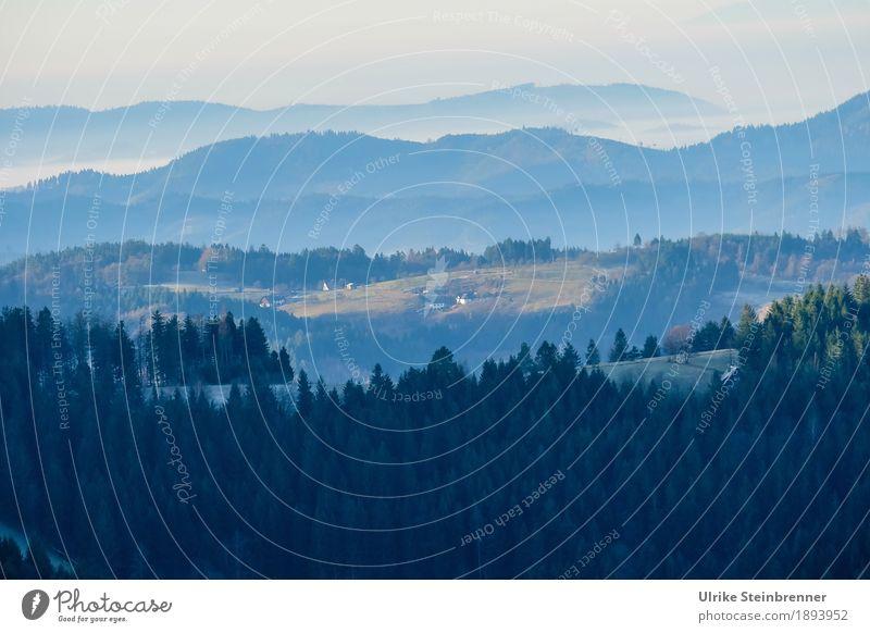 Muldenlage 2 Natur Ferien & Urlaub & Reisen Pflanze Baum Landschaft Erholung Einsamkeit Winter Ferne dunkel Wald Berge u. Gebirge Umwelt kalt natürlich