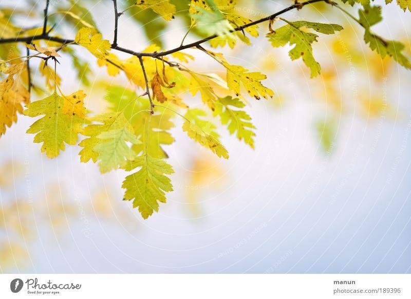 goodbye summer Natur Farbe Erholung Blatt ruhig gelb Herbst hell Park Zufriedenheit Wachstum frisch gold Schönes Wetter Freundlichkeit Wandel & Veränderung