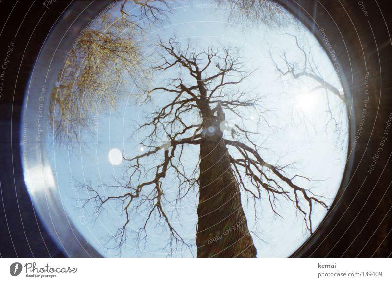 Baumskelett, hoch Himmel Natur alt grün Pflanze Blatt Umwelt Landschaft Herbst Luft braun Kraft Wachstum Macht Schönes Wetter