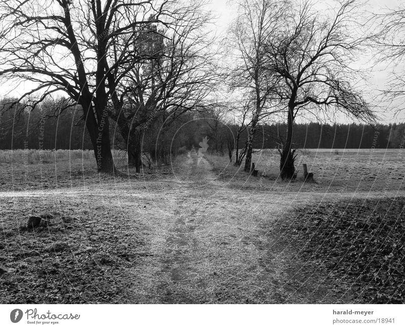 Auf dem Weg Winter Baum Wege & Pfade Schwarzweißfoto Mischung