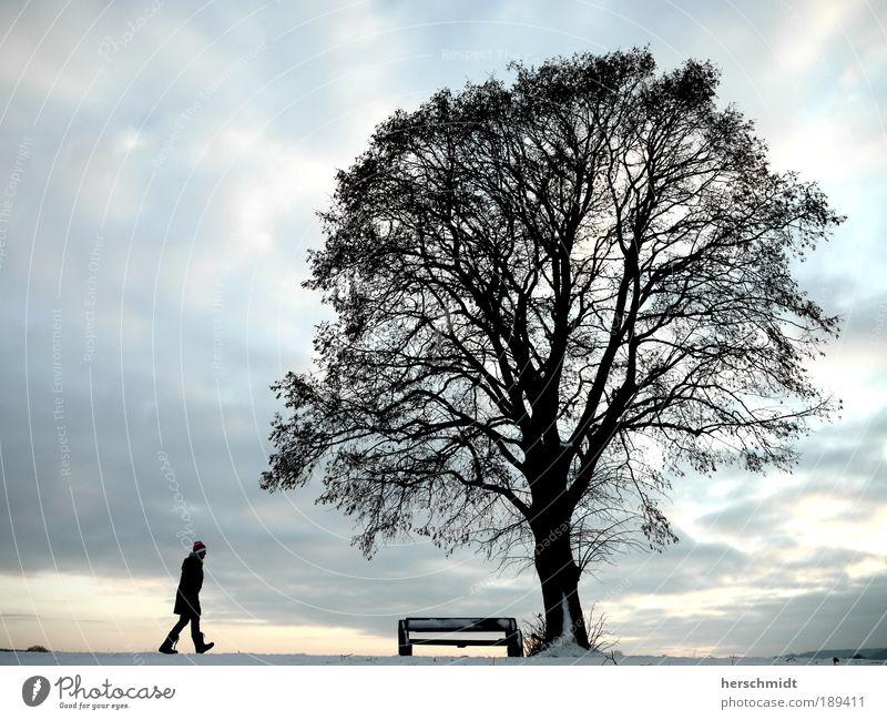 Da ist ne Bank, da setz ich mich Mensch 1 Natur Landschaft Himmel Wolken Horizont Winter Schnee Baum Straße Wege & Pfade Mantel Mütze Denken frieren gehen Blick