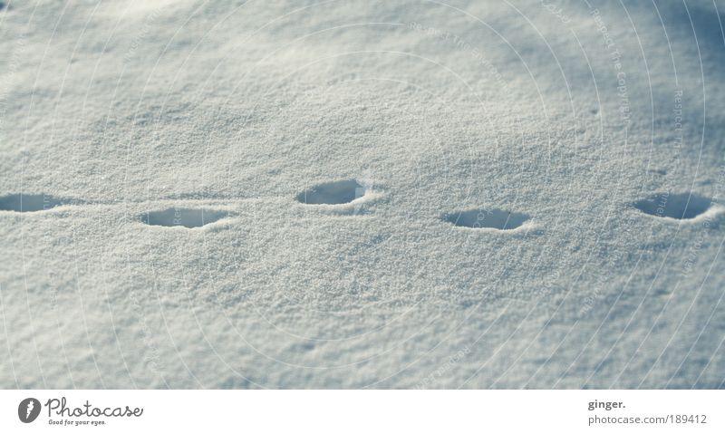 Tip Tap Umwelt Natur Winter Schnee kalt weiß grau-blau Spuren tip tap schleichen gehen hinterlassen Schatten Licht Streifen Fußabdrücke eintauchen tief versetzt