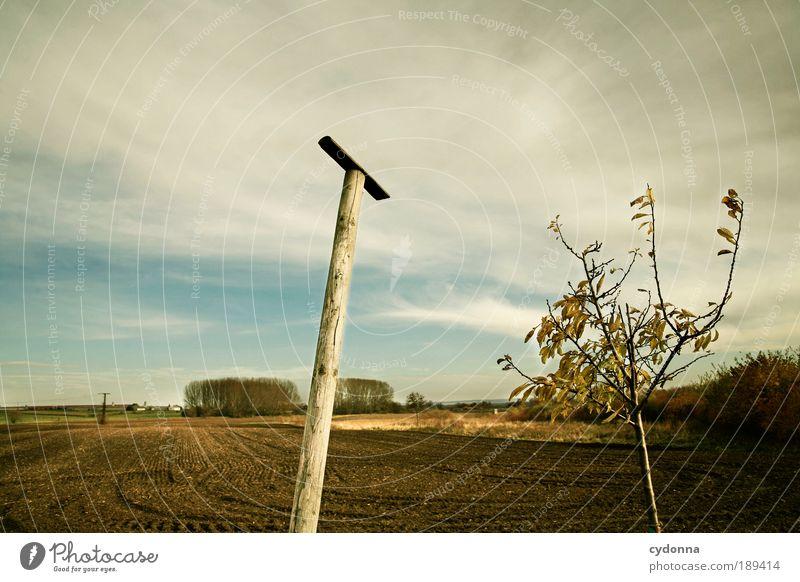 Wo ist das Vögelchen? Wohlgefühl Erholung ruhig Ferne Freiheit wandern Umwelt Natur Landschaft Himmel Herbst Baum Feld ästhetisch Einsamkeit Idee Idylle Leben