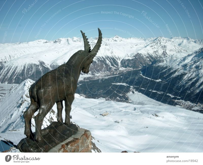 Winterlandschaft Schweiz Engadin Piz Nair Berge u. Gebirge Schnee Schneebedeckte Gipfel Statue Skigebiet Tal Schneelandschaft Kanton Graubünden Skipiste Gemse
