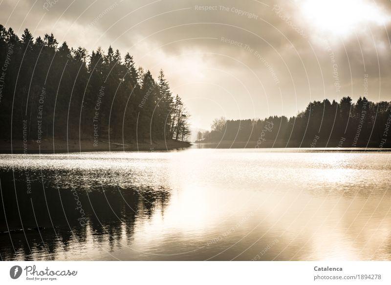 Wintermorgen wandern Natur Landschaft Pflanze Wasser Himmel Fichtenwald Seeufer Stausee frieren glänzend ästhetisch Flüssigkeit kalt gelb schwarz silber weiß
