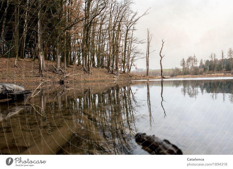 Pause nackt Wasser weiß Baum Landschaft Blatt ruhig Winter schwarz kalt Holz See braun Stimmung wandern Erde