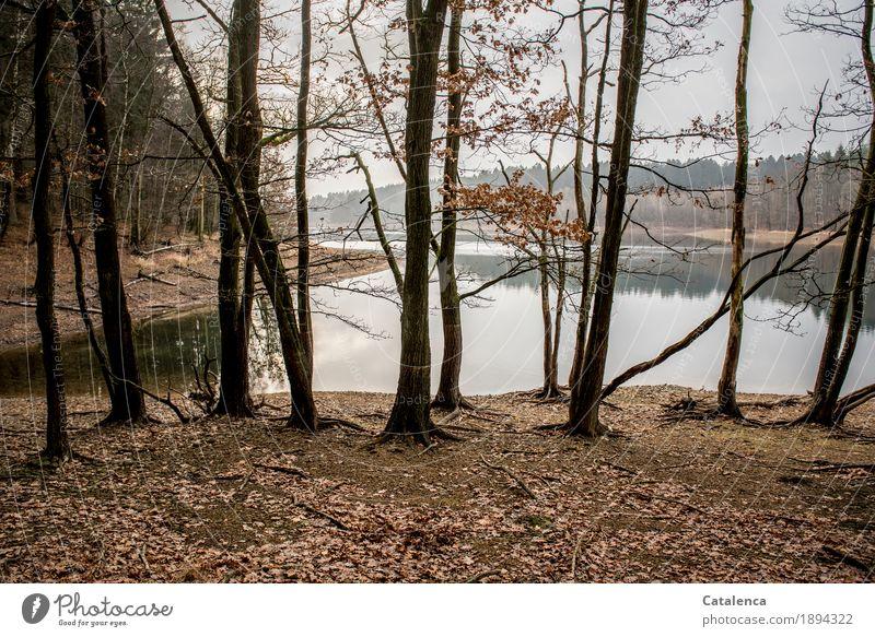 Durchblick Winter wandern Natur Landschaft Erde Wasser Himmel schlechtes Wetter Baum Blatt Buchenwald Fichtenwald Wald Seeufer Talsperre Schwimmen & Baden