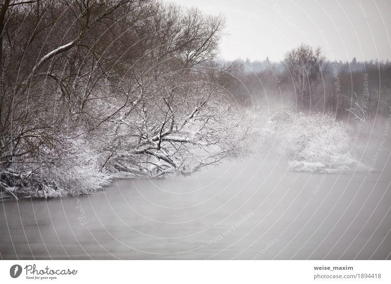 Schnee und Frost auf den Bäumen und den Büschen Ferien & Urlaub & Reisen Winter Natur Landschaft Pflanze Wolken Wetter Nebel Schneefall Baum Sträucher Park Wald