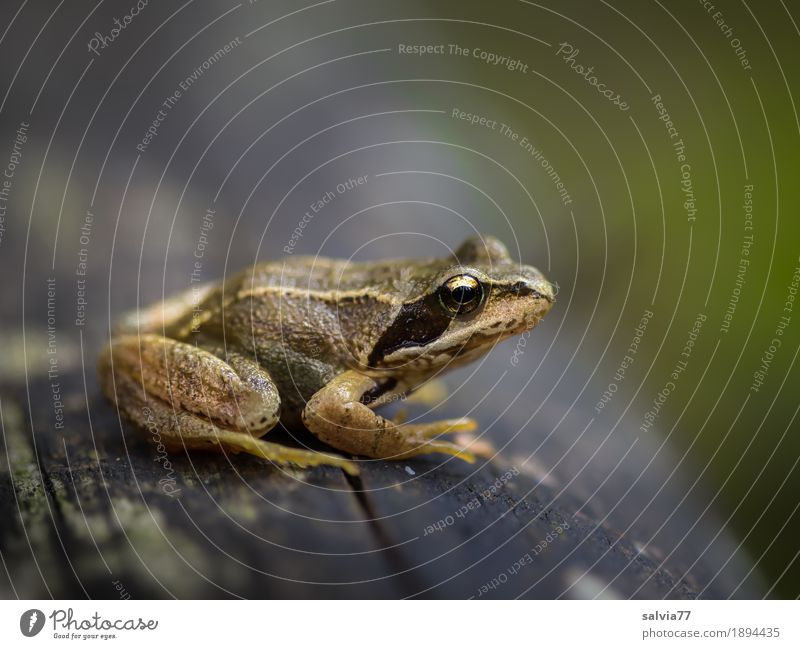 den Überblick behalten Natur grün Tier ruhig Wald Umwelt grau braun oben Feld Wildtier Perspektive beobachten Baumstamm Wachsamkeit Tiergesicht