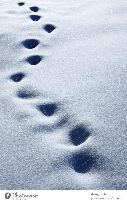 Abschied von Daisy Winter Einsamkeit kalt Schnee Tod Eis gehen Wetter laufen Trauer Abenteuer Frost weich Klima Spuren Sehnsucht
