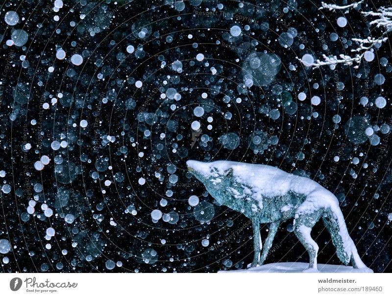 Winterwolf ruhig Einsamkeit Tier Schnee Schneefall Eis Kraft Landraubtier Nacht ästhetisch Abenteuer Frost Kunst Statue frieren